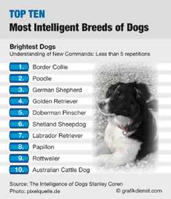 Smartest Cat Breed List